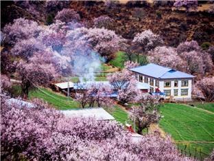 三月西藏林芝桃花源探秘随机实播