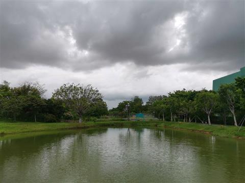 雨后游走福田红树林生态公园