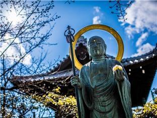 想去寺庙换种活法